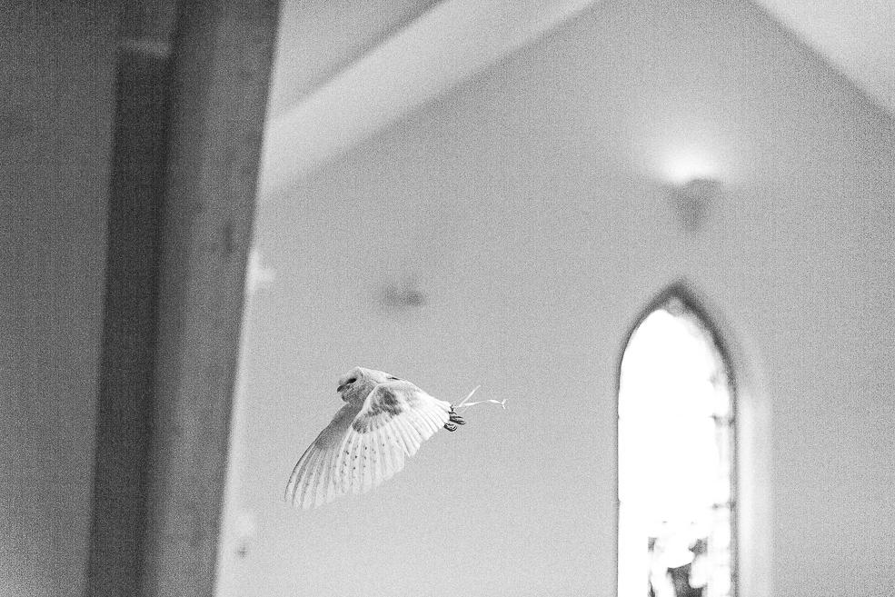 A bird flying in the church