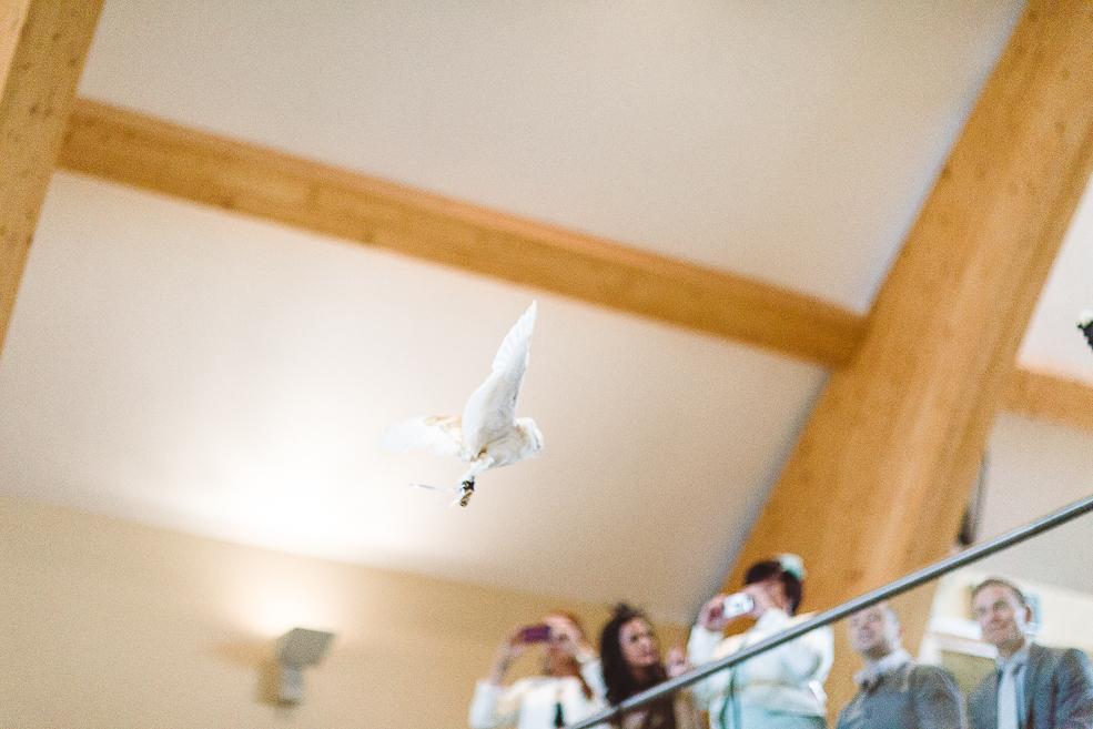 A group of people looking at the white pigeon in church during the ceremony