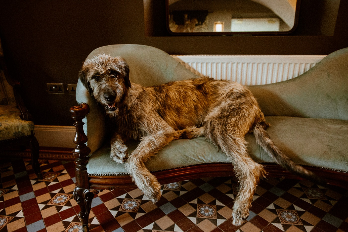A large brown dog lying on a rug