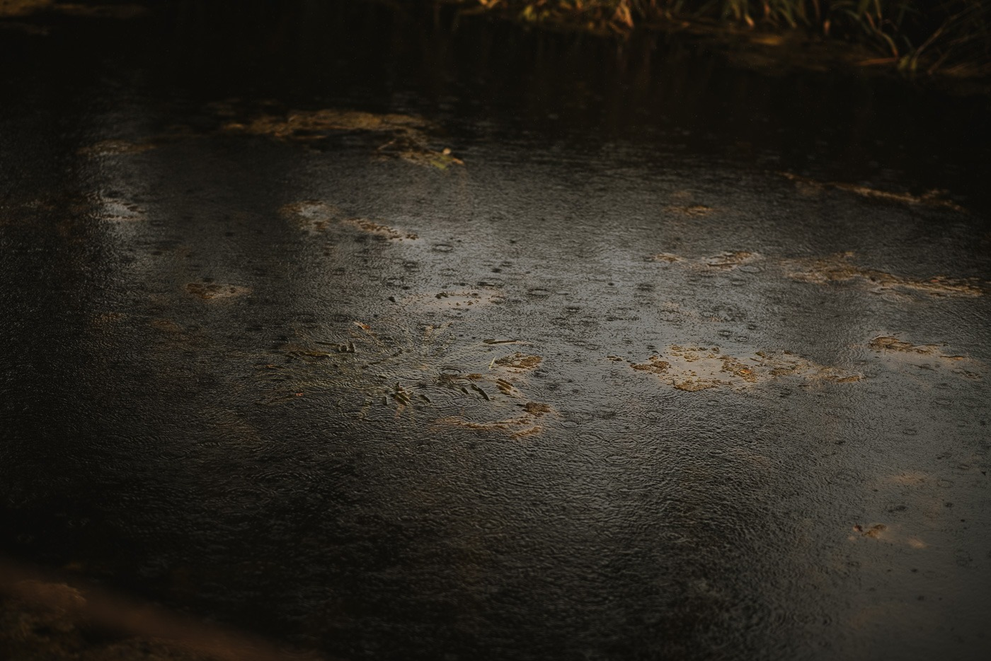A very dark water