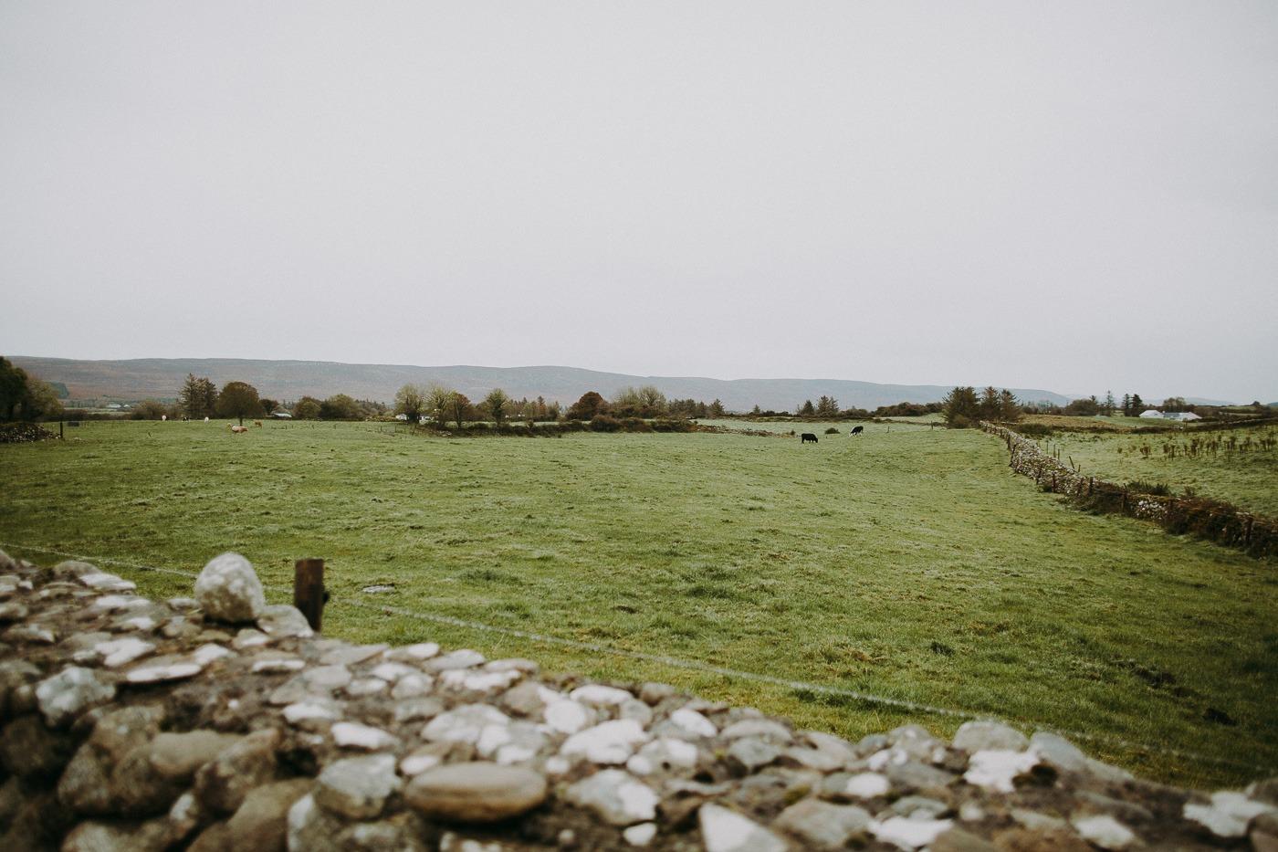 A herd of sheep grazing in a rocky field
