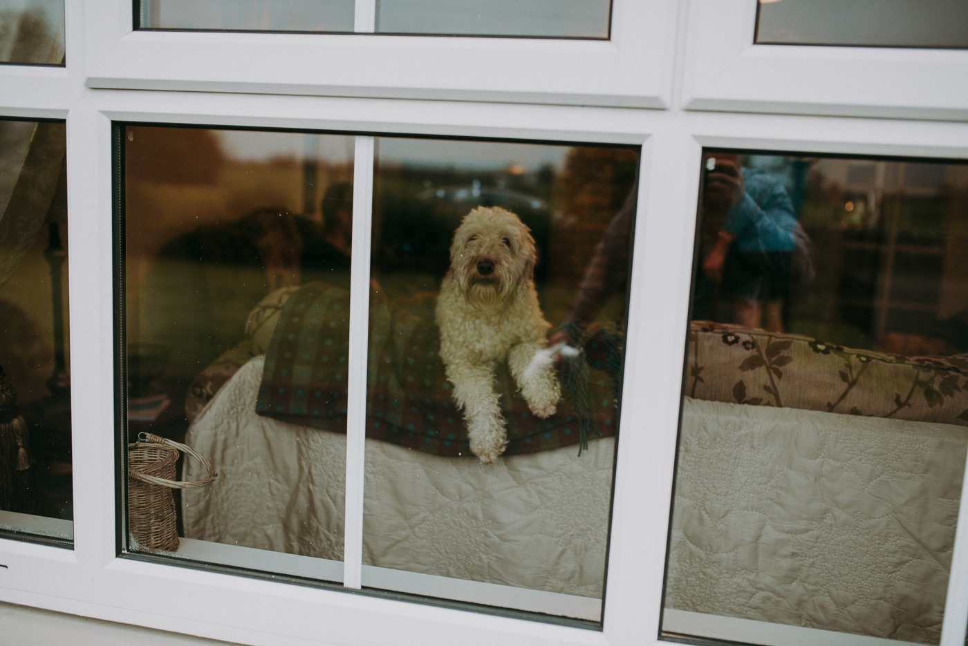 A dog is looking out of a window