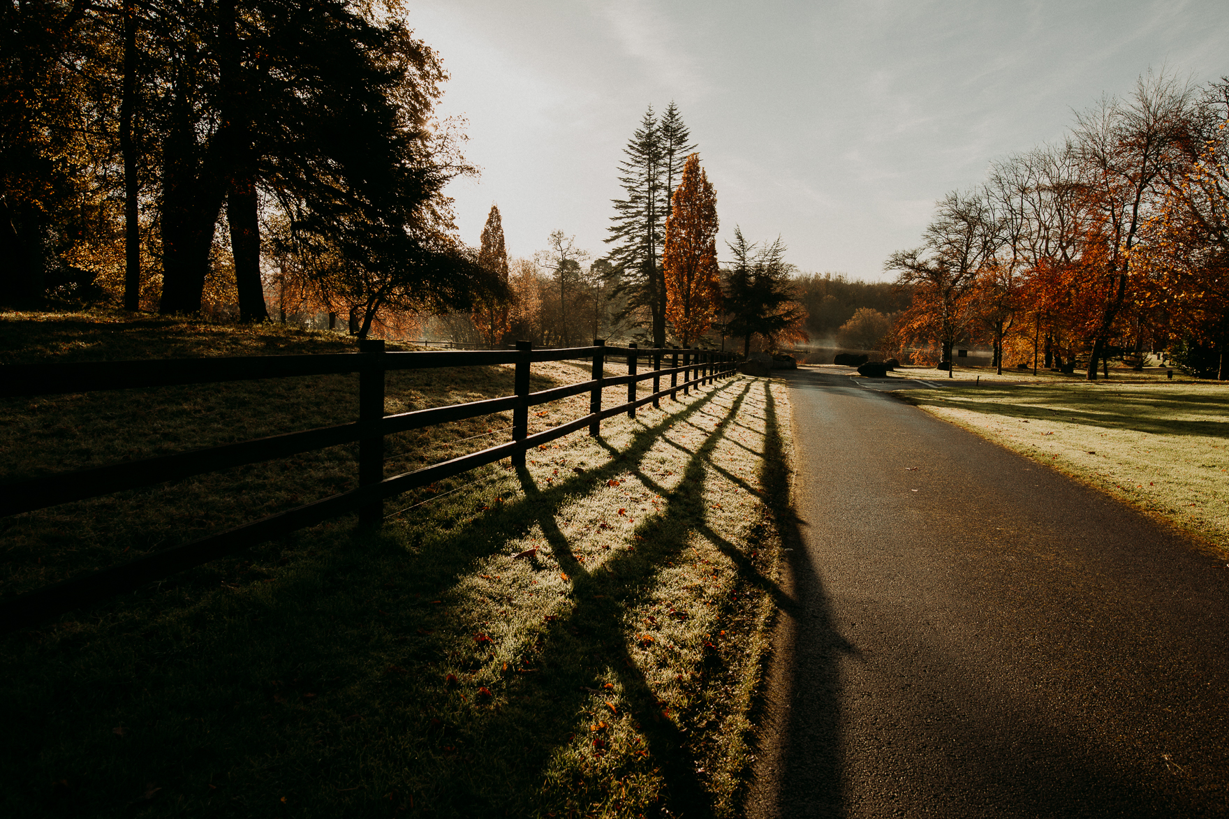 A path with trees on the side of a fence