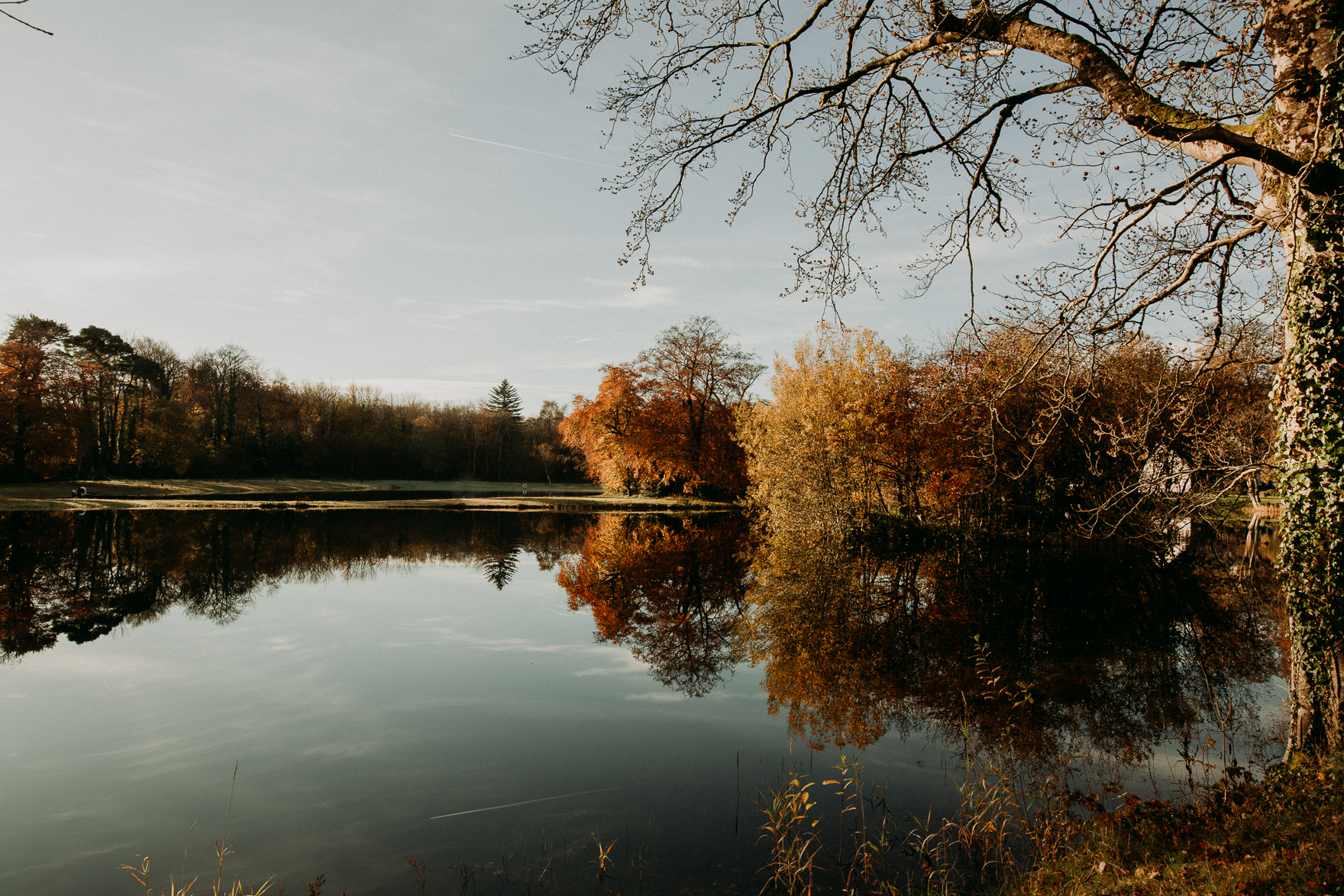 A large body of water surrounded by trees