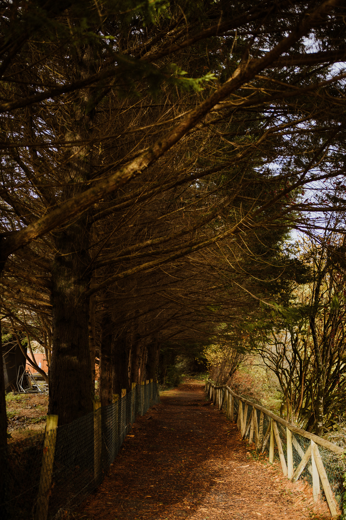 A path with trees on the side of a tree