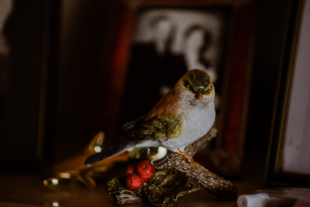 A bird sitting on top of a wooden table